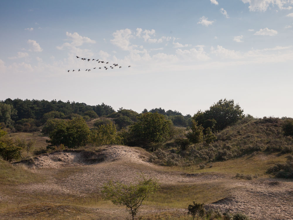 The landscape at the Amsterdamse Waterleidingduinen nature reserve